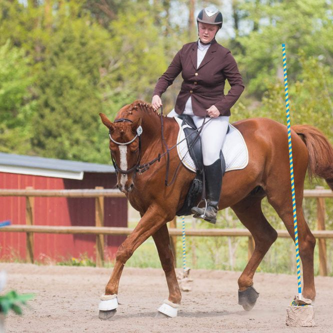 Working Equitation på Uppsala Ponnyklubb